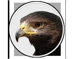 Operating System Logo